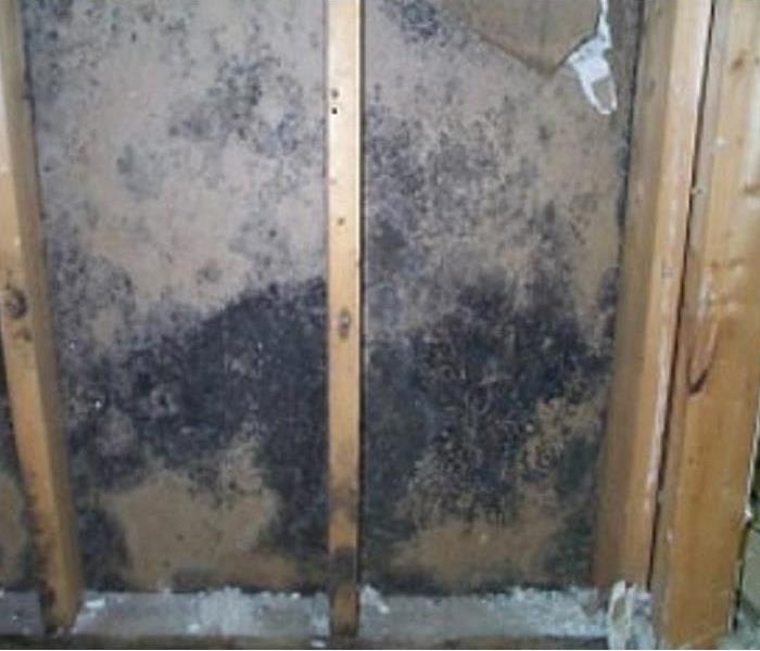 What Causes Mold Inside A Home?